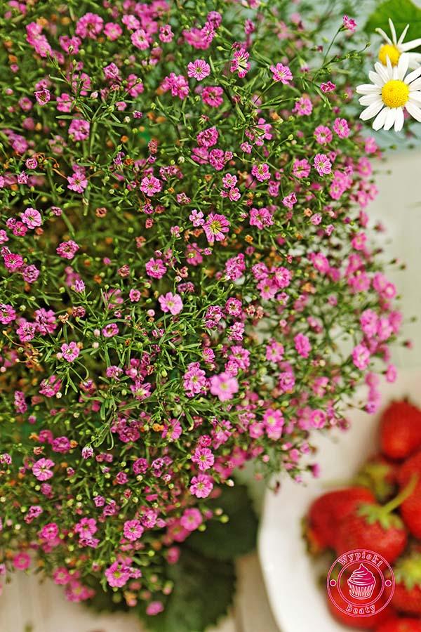 truskawkowe tiramisu kwiatki